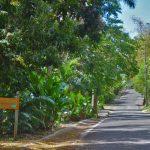 Fig Tree Drive Antigua
